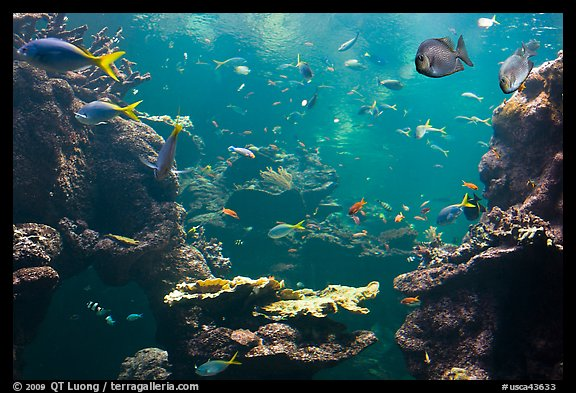 Picture Photo Tropical Fish Philippine Coral Reef