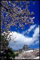 Cherry blooms and castle. Himeji, Japan (color)