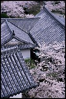Roofs and cherry blossoms seen from the castle donjon. Himeji, Japan