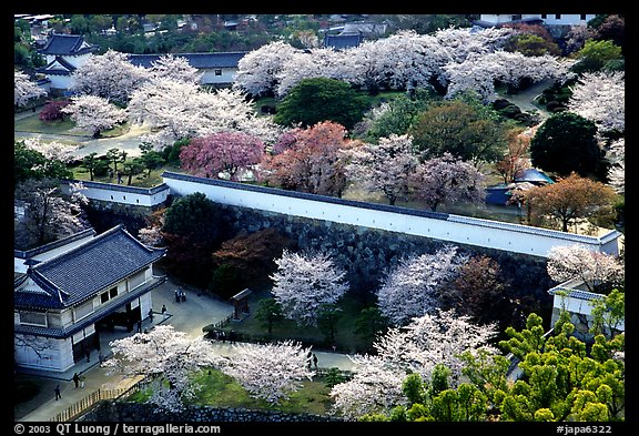 Castle grounds and walls with blossoming cherry trees. Himeji, Japan