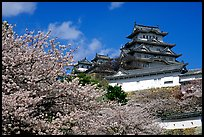 Blooming cherry tree and castle. Himeji, Japan (color)