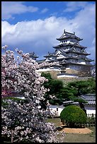 Blossoming cherry tree and castle. Himeji, Japan (color)
