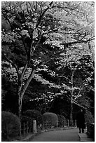Tetsugaku-no-Michi (Path of Philosophy), a walkway lined up with cherry blossoms. Kyoto, Japan ( black and white)