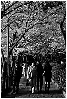 Strollers follow the Tetsugaku-no-Michi (Path of Philosophy), a traffic-free route. Kyoto, Japan ( black and white)