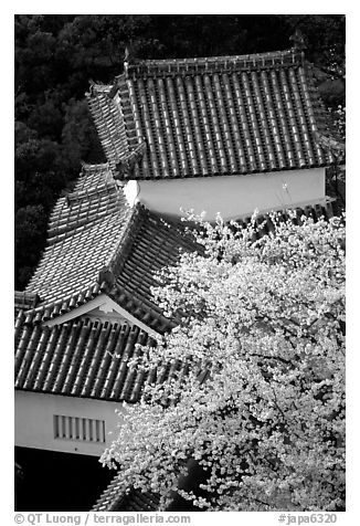 Rooftops and cherry trees seen from the castle donjon. Himeji, Japan
