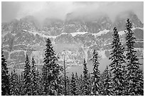Conifers and steep rock face in winter. Banff National Park, Canadian Rockies, Alberta, Canada (black and white)