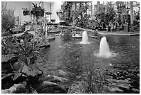Indoor pond and garden. Calgary, Alberta, Canada (black and white)