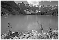 Fireweed and turquoise waters of Moraine Lake, late morning. Banff National Park, Canadian Rockies, Alberta, Canada (black and white)