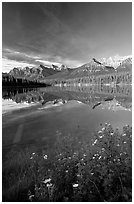 Yellow flowers and Bow range reflected in Herbert Lake, early morning. Banff National Park, Canadian Rockies, Alberta, Canada (black and white)