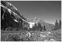 Alpine meadow at the base of Mt Edith Cavell. Jasper National Park, Canadian Rockies, Alberta, Canada ( black and white)