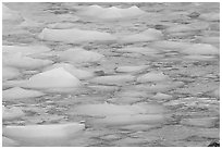 Close-up of icebergs floating in reflected yellow light. Jasper National Park, Canadian Rockies, Alberta, Canada ( black and white)