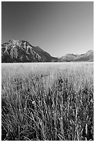Grass prairie and front range Rocky Mountain peaks. Waterton Lakes National Park, Alberta, Canada ( black and white)