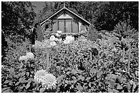 Dalhias and cabin. Butchart Gardens, Victoria, British Columbia, Canada ( black and white)
