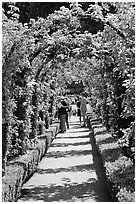 Arbour and path in Rose Garden. Butchart Gardens, Victoria, British Columbia, Canada ( black and white)