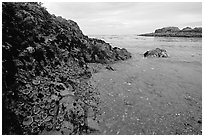 Cove and rock festoned with anemones south of Long Beach. Pacific Rim National Park, Vancouver Island, British Columbia, Canada ( black and white)