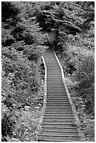 Boardwalk leading to South Beach. Pacific Rim National Park, Vancouver Island, British Columbia, Canada ( black and white)