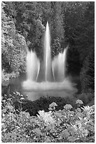 Ross Fountain and flowers. Butchart Gardens, Victoria, British Columbia, Canada ( black and white)