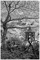 Lantern and Variegated Dogwood, Japanese Garden. Butchart Gardens, Victoria, British Columbia, Canada ( black and white)