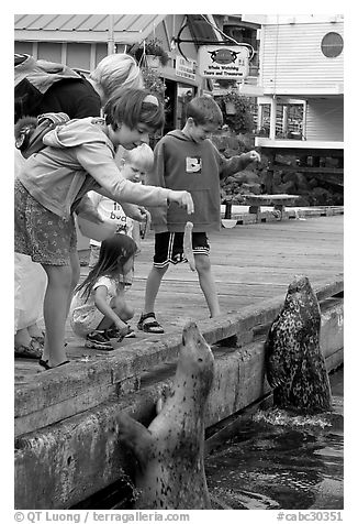Kids feeding harbour seals, Fisherman's wharf. Victoria, British Columbia, Canada (black and white)