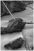 Fallen trees in silt-colored Tokkum Creek. Kootenay National Park, Canadian Rockies, British Columbia, Canada ( black and white)