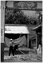 Men extract grains in a farm courtyard. Shaping, Yunnan, China (black and white)