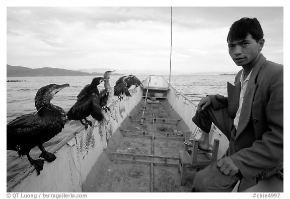 Fisherman and cormorant fishing birds. Dali, Yunnan, China
