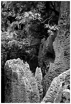 Details of grey limestone pinnacles of the Stone Forst. Shilin, Yunnan, China ( black and white)