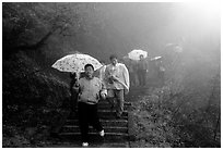 Pilgrims with umbrellas descend some of the tens of thousands of stairs. Emei Shan, Sichuan, China ( black and white)