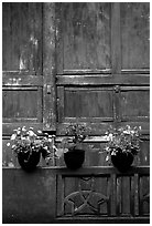 Potted flowers and wooden wall in Bailongdong temple. Emei Shan, Sichuan, China ( black and white)