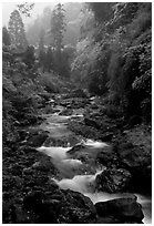 Stream between Qingyin and Hongchunping. Emei Shan, Sichuan, China ( black and white)
