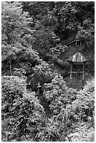 Path and pavillon on steep hillside between Qingyin and Hongchunping. Emei Shan, Sichuan, China ( black and white)