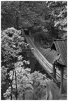 Suspension bridge between Qingyin and Hongchunping. Emei Shan, Sichuan, China ( black and white)