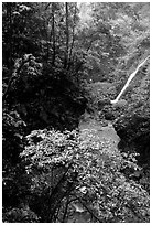 Waterfall between Qingyin and Hongchunping. Emei Shan, Sichuan, China ( black and white)