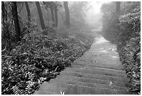 The staircase above Hongchunping. Emei Shan, Sichuan, China ( black and white)