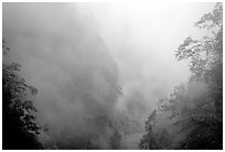 Cliffs and trees in mist between Hongchunping and Xiangfeng. Emei Shan, Sichuan, China ( black and white)