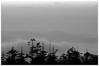 Sunset on a sea of clouds. Emei Shan, Sichuan, China ( black and white)