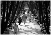 Walking to work and for exercie in a tree-lined alley of Liuha Park. Guangzhou, Guangdong, China ( black and white)