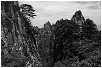 Huangshuan pines clinging on granite cliffs. Huangshan Mountain, China ( black and white)
