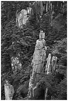 Granite spires rising from forest. Huangshan Mountain, China ( black and white)