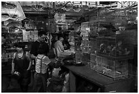 Caged birds for sale at Bird and Insect Market. Shanghai, China ( black and white)