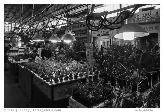 Plants for sale at Bird and Insect Market. Shanghai, China (black and white)