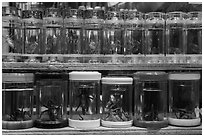 Live insects for sale. Shanghai, China ( black and white)