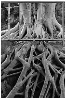 Roots and fence, Guandu Temple. Taipei, Taiwan (black and white)