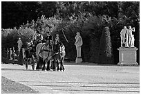 Horse carriage in an alley of the Versailles palace gardens. France ( black and white)