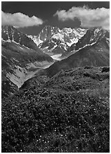Meadow with wildflowers with Grandes Jorasses in the background, Chamonix. France (black and white)