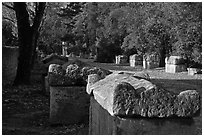 Burial grounds, Alyscamps necropolis. Arles, Provence, France ( black and white)