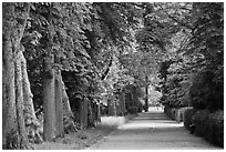 Chestnut trees, alley in English Garden, Palace of Fontainebleau. France ( black and white)