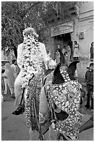 Flower-covered groom riding on horse. Jodhpur, Rajasthan, India (black and white)