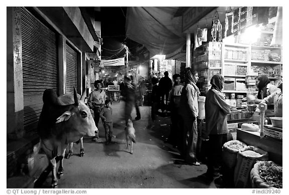 Sacred cow and street by night, Taj Ganj. Agra, Uttar Pradesh, India (black and white)