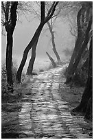 Secondary path, Keoladeo Ghana National Park. Bharatpur, Rajasthan, India ( black and white)